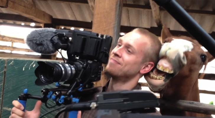 O cameraman tenta filmar, mas o cavalo deixa o seu trabalho impossível!
