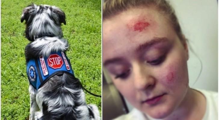 L'histoire de cette fille nous explique pourquoi les chiens-guides ne doivent PAS être caressés