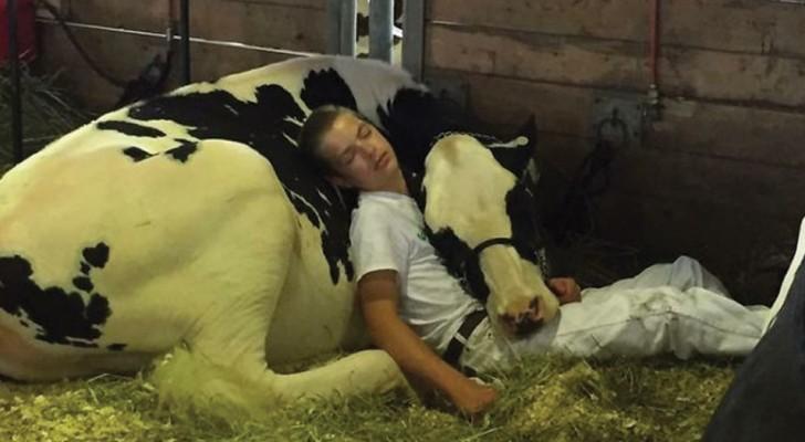 Ze verloren de race en vielen zij aan zij in slaap: de foto van deze jongen en zijn koe ging de hele wereld over!