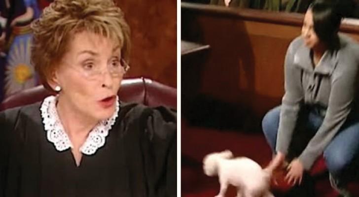deux personnes revendiquent le m me chien l 39 id e ing nieuse du juge ne laisse aucun doute. Black Bedroom Furniture Sets. Home Design Ideas