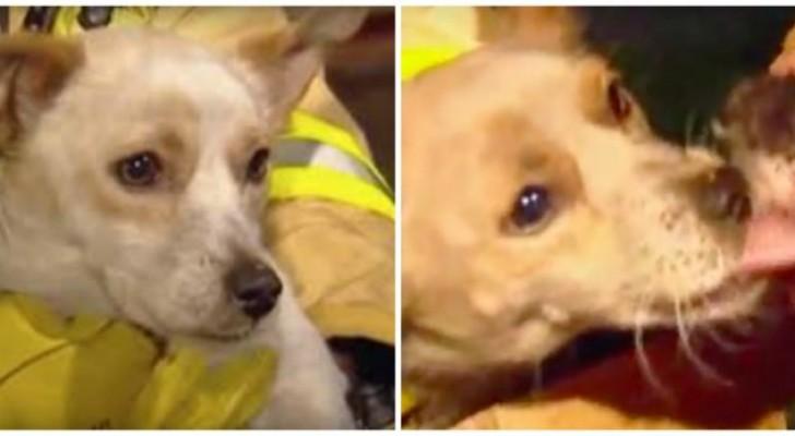 Toda a família tinha sido salva, menos um dos cães: depois os bombeiros descobrem porque ele tinha ficado ali!