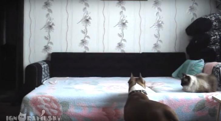 Quando o cachorro fica em casa