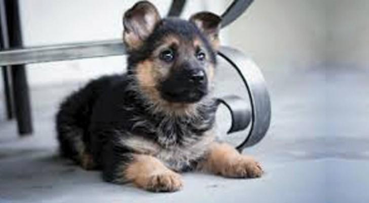 Uno studio conferma che i cani sanno riconoscere una persona cattiva. Ecco come...