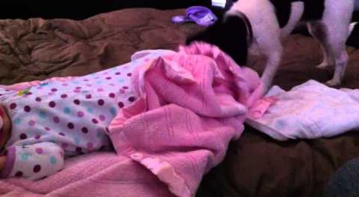 Le chien qui borde bébé