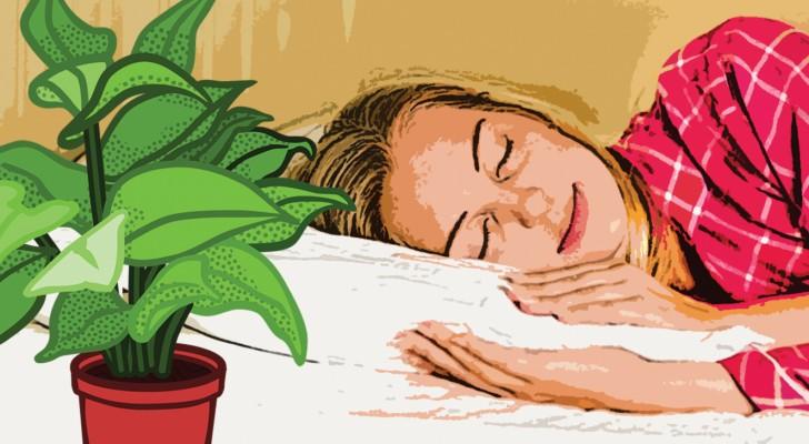 9 plantes à avoir à la maison pour bien dormir toutes les nuits