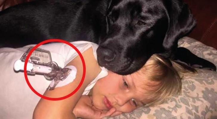 El perro despierta a la mujer en el corazon de la noche: cuando va a la habitacion entiende que su hijo esta mal