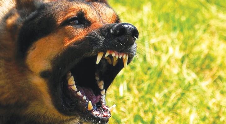 Les chiens savent reconnaître si une personne est bonne ou mauvaise: c'est ce que soutient la recherche scientifique