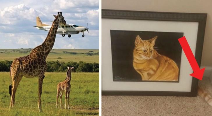 14 fantastiska bilder tagna precis vid rätt tidpunkt!