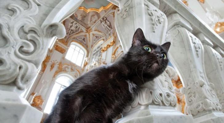 I guardiani dell'Ermitage: a proteggere le opere del museo ci pensa una colonia di gatti