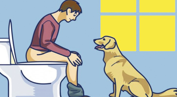Si el perro te sigue al baño, no ignorarlo: esto es lo que esta buscando de comunicarte