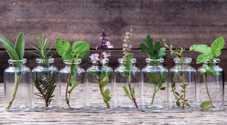 Voici 10 herbes que vous pouvez cultiver dans l'eau et avoir toujours fraîches pendant un an