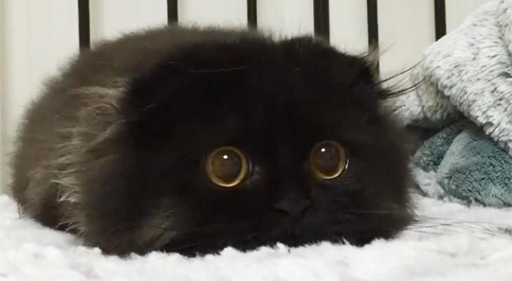 Voici Gimo, le chat aux yeux les plus grands que vous ayez jamais vus