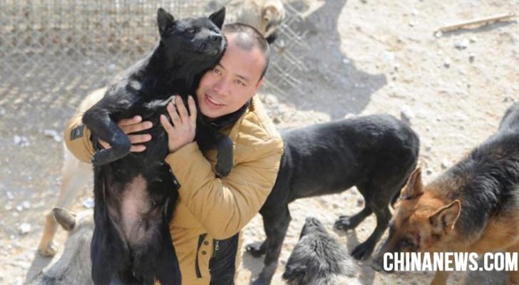 Un milionario cinese decide di spendere tutto per salvare i cani dal mattatoio, dopo aver perso il suo