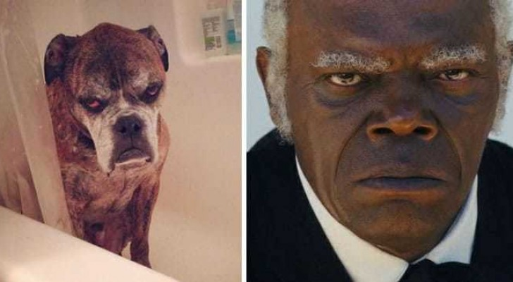11 Famous people who have a double ...that just happens to be an animal!