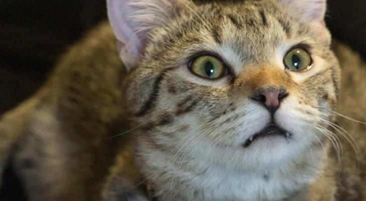 É possível que o meu gato veja fantasmas? Veja o que acontece quando um gato fixa um ponto