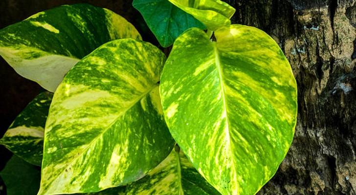Voici la plante domestique qui selon la NASA élimine les agents polluants dans un appartement