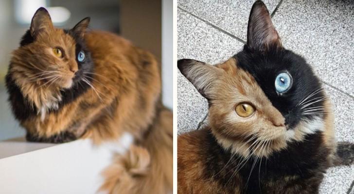 Diese Katze ist der schönste Scherz der Natur, den wir je gesehen haben