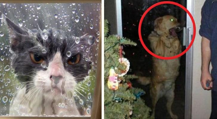22 fotos de animales que no tienen ninguna intencion de quedar fuera de casa