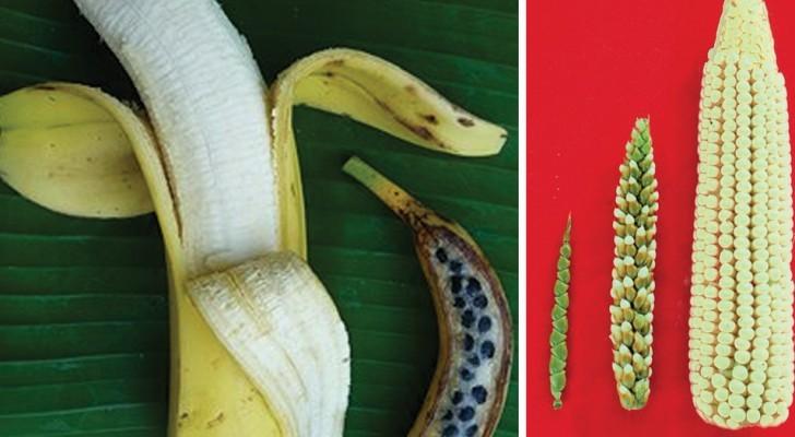 Zo zagen enkele soorten groente en fruit eruit voordat de mens ze begon te cultiveren