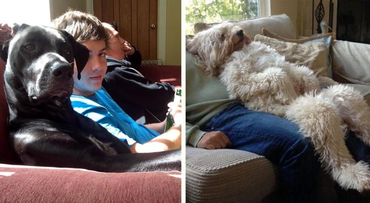 20 grappige foto's van honden die zich als mensen gedragen