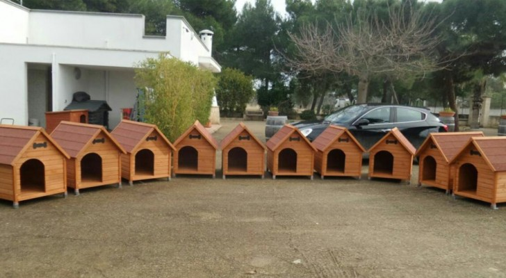 Questo comune italiano ha installato delle cucce di quartiere per proteggere i randagi dal freddo