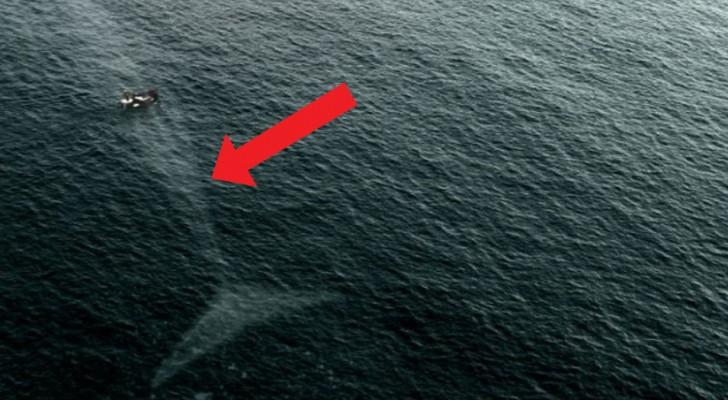 15 foto's van zee monsters waar je zo bang van wordt dat je het water niet meer in durft