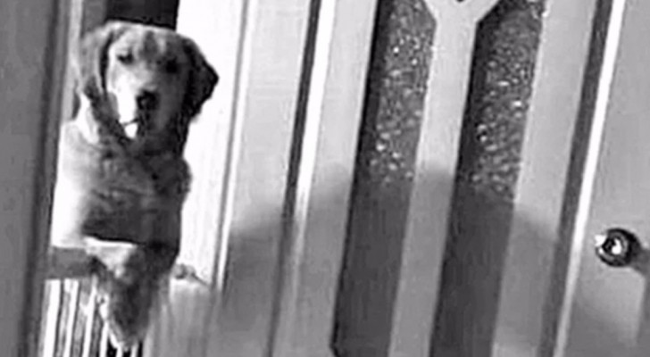 A dog stares at its new owners every night and the reason why makes the family cry ...
