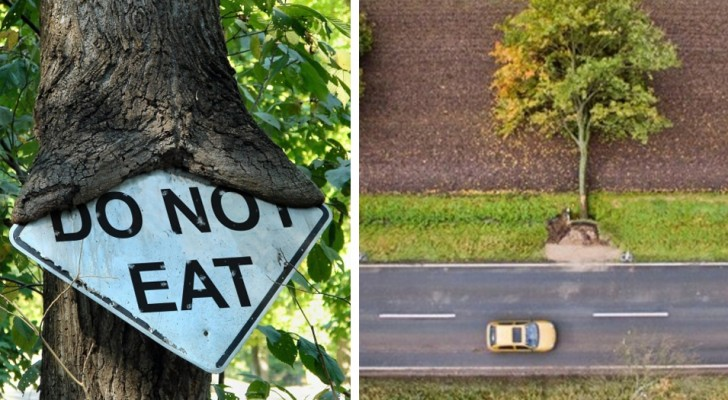 18 surreal images that show us what nature is capable of ...