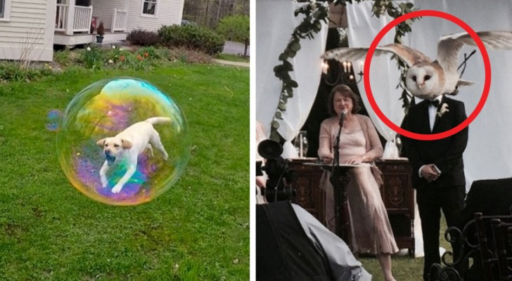 17 photos qui vous montreront ce qu'une coïncidence peut faire