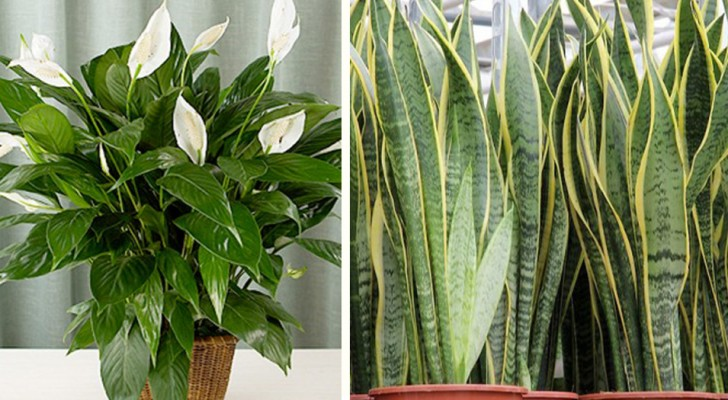 7 indoor house plants to have at home to improve air quality