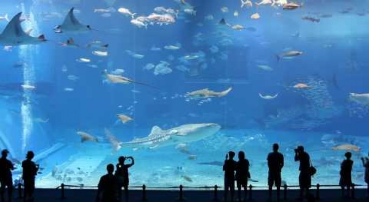 Il secondo acquario più grande del mondo