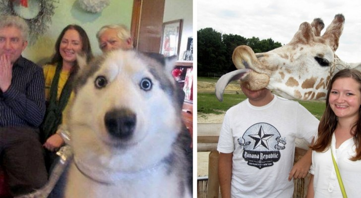 23 animals that popped up in photos with humans ... and created a MASTERPIECE