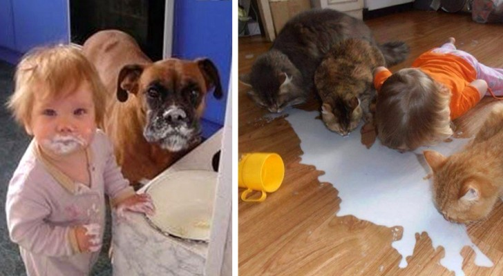 19 times children and animals have created entertaining situations