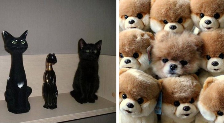 23 animals that have perfectly mastered the art of camouflaging themselves