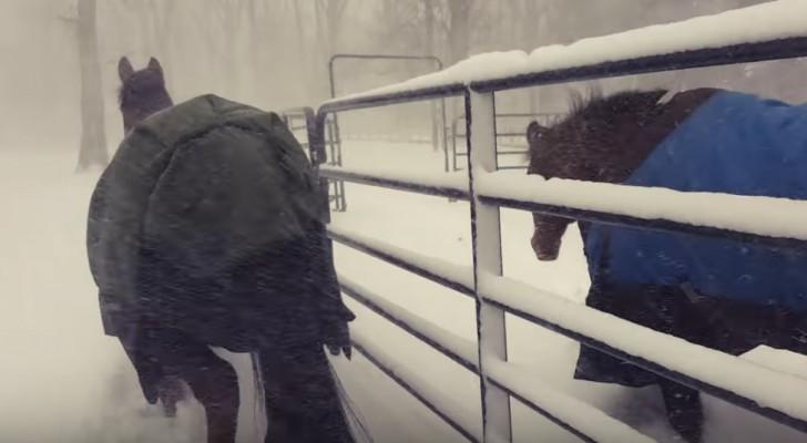 Er lässt die Pferde raus während es schneit, doch diese Reaktion hatte er nicht erwartet