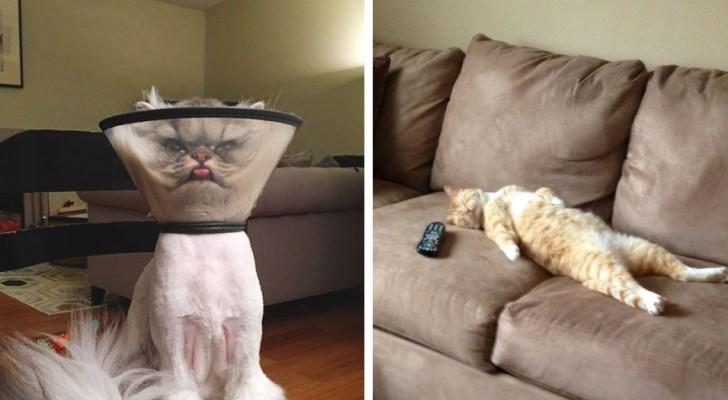 20 fotos de gatos que só os donos de gatos poderão entender