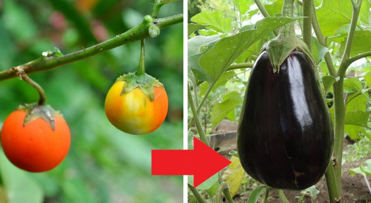 9 impressive images show us how fruits and vegetables have changed over the centuries