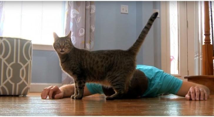 Hij doet net alsof hij zich niet goed voelt in het bijzijn van de kat: je ligt in een deuk om de reactie van het dier