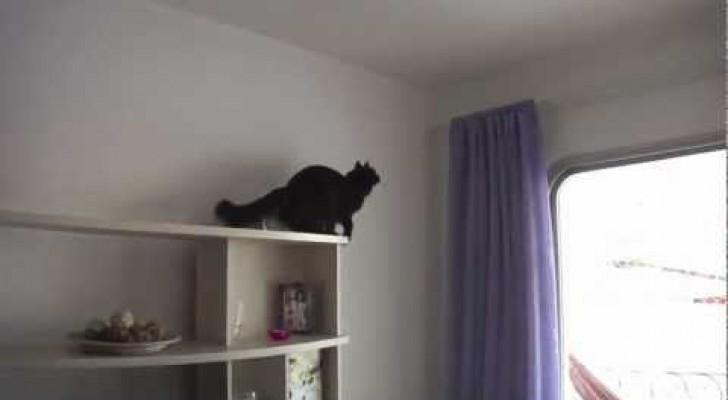 Il gatto mission impossible