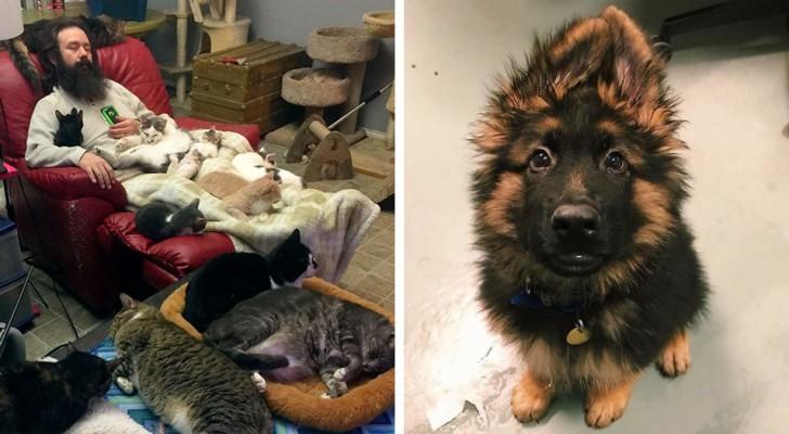 25 fotos tiradas nos refúgios para animais que você não pode deixar de ver!