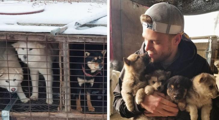 Questo sciatore olimpico ha contribuito a salvare 90 cani dal macello in Corea del Sud