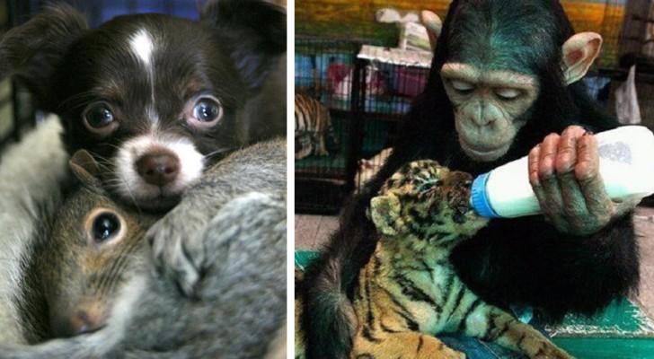 Ces images montrent que les animaux savent être beaucoup plus gentils que nous