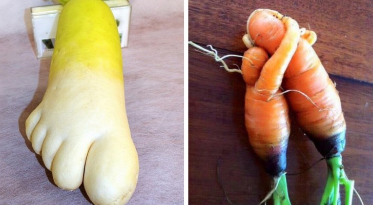 These vegetables seem like something else --- would you have the courage to eat them?
