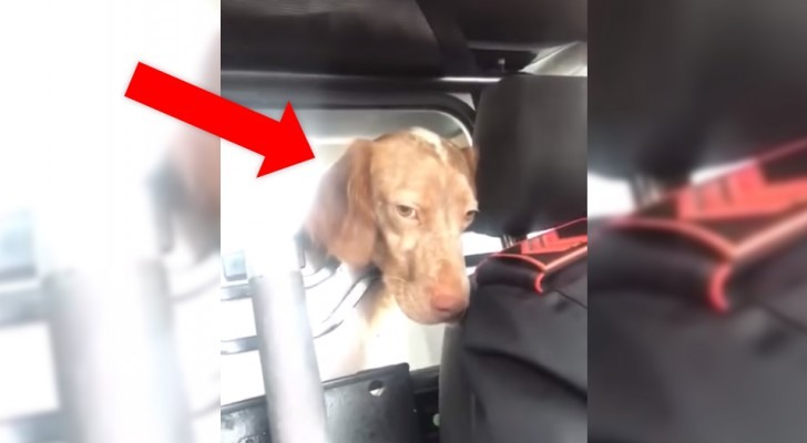 I carabinieri salvano un cane dalla strada: il video del loro tragitto in auto vi strapperà un sorriso