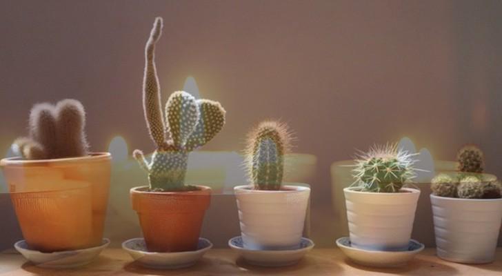 Ecco quali sono le 7 piante protettive della casa e come dovresti usarle