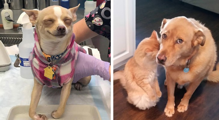 20 times when dogs were the protagonists of hilarious situations
