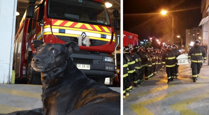 A fire station dog passes away and the farewell given to him by his