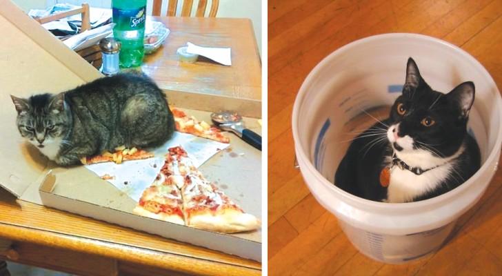 Alcuni gatti che se ne infischiano di tutto... e di cui non potrete che innamorarvi