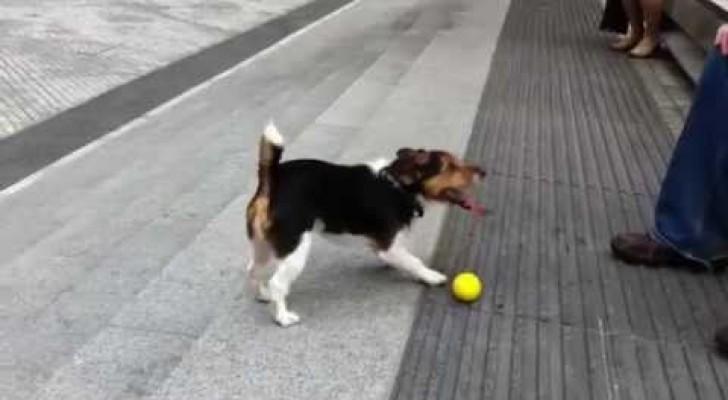 Cachorros inteligentes brincam sozinhos