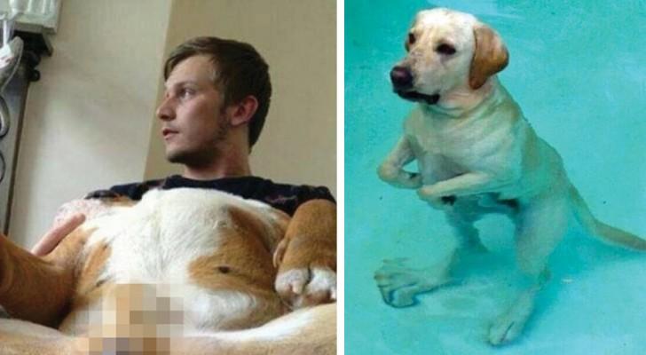Das sind die berauschendsten Gesichtsausdrücke, die ihr je bei Hunden gesehen habt